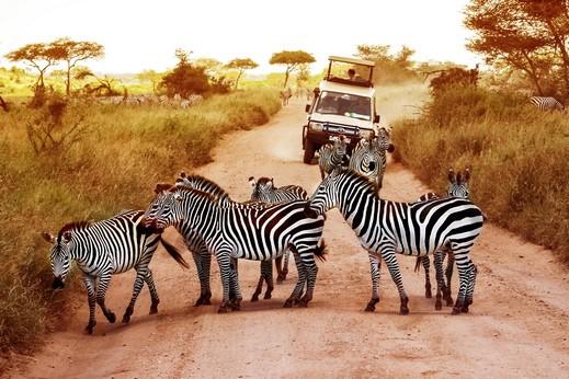 أمور عليك معرفتها قبل السفر الى كينيا