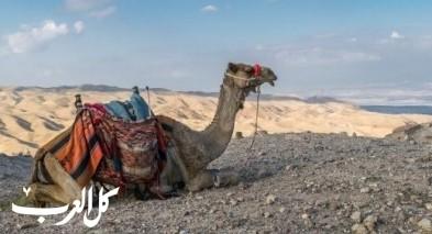 رحلة مصوّرة إلى صحراء النقب