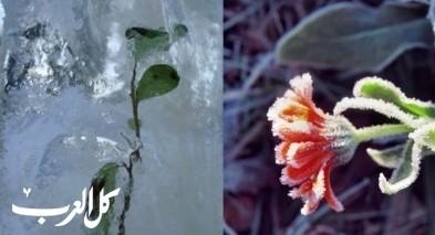 علماء يكتشون نبتة حية تعود إلى العصر الجليدي