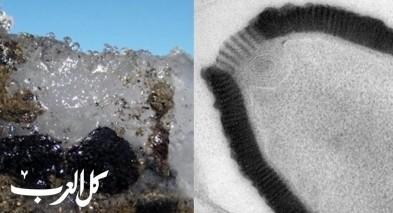 ذوبان الجليد يكشف عن فيروسات نشطة