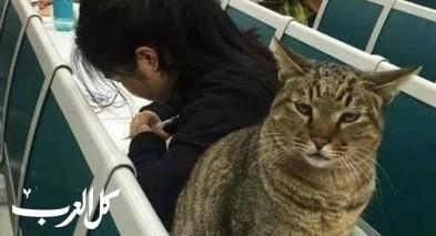 تخايلوا ان يكون مراقب امتحانكم قطا!!!
