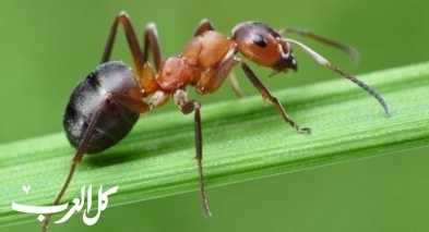 سعودي يقاضي شابًّا لدهسه نملة!
