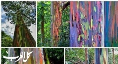 أغرب الأشجار في العالم..شجرة تنزف دمًا