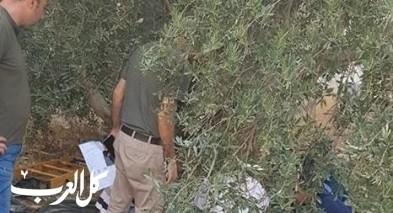 كابول: اصابة مسن بعد سقوطه خلال قطف الزيتون