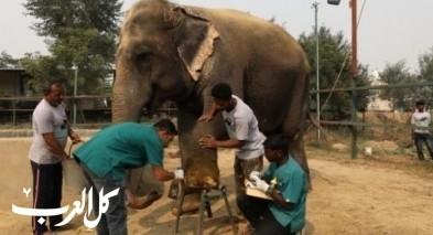 صور- مستشفى خاص للفيلة في الهند!