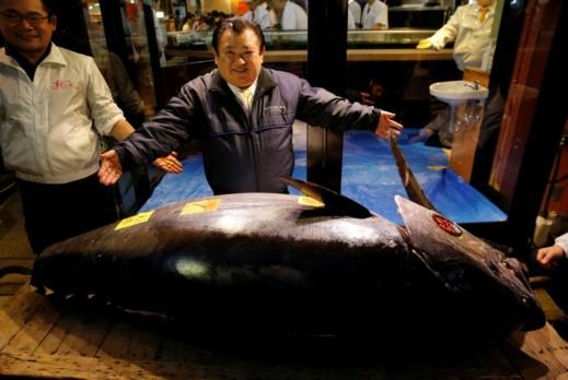سمكة تونة الأغلى بالعالم بـ3 ملايين دولار!
