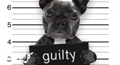 محاكمة الحيوانات.. ما يقف خلفها؟