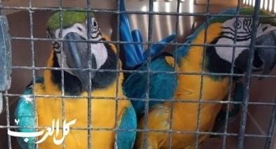الخضيرة: توقيف مشتبه بتربية طيور محمية
