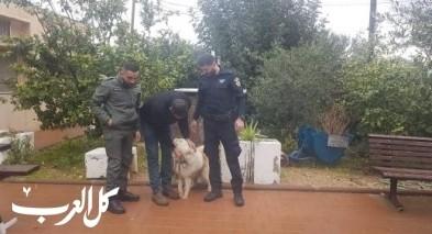 التحقيق مع مشتبه من الطيبة بشبهة سرقة كلبين
