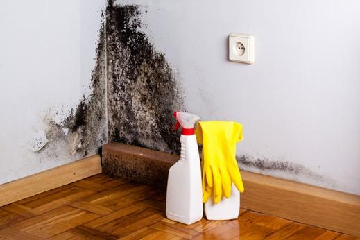 دراسة: منازلكم تضمّ آلاف الجراثيم!