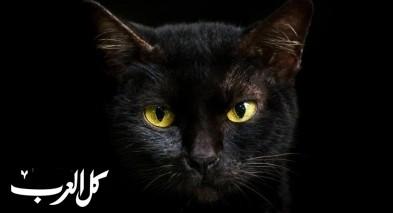 لماذا تبرق عينا القط في الظلام؟