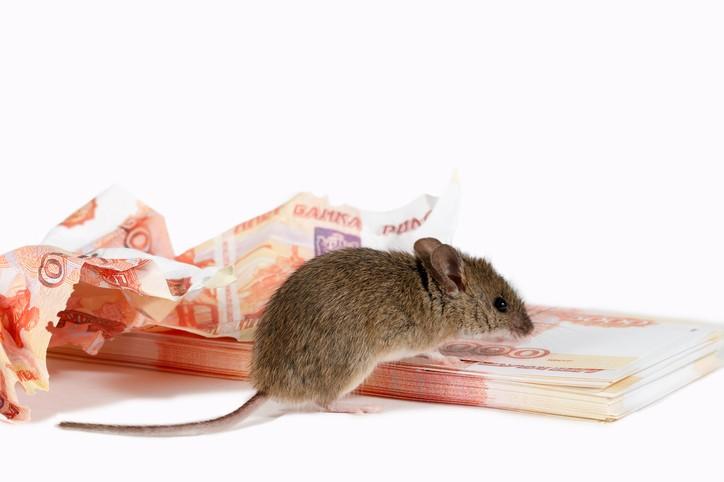 الهند: فأر يلتهم آلاف الدولارات في ماكينة السحب