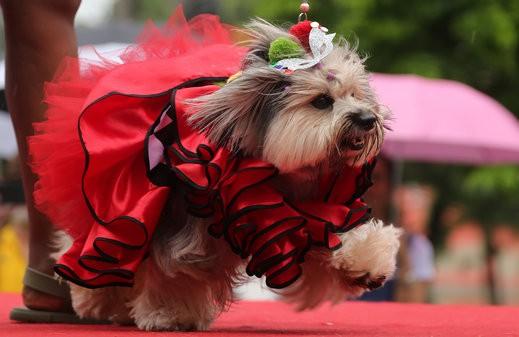 الكلاب تخطف الأنظار بمهرجان ريو دي جانيرو