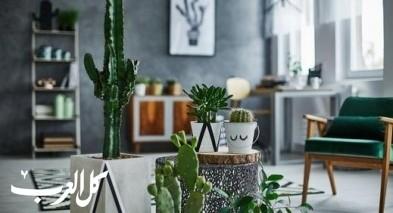 كيف تنسّقين النباتات والزهور في المنزل؟