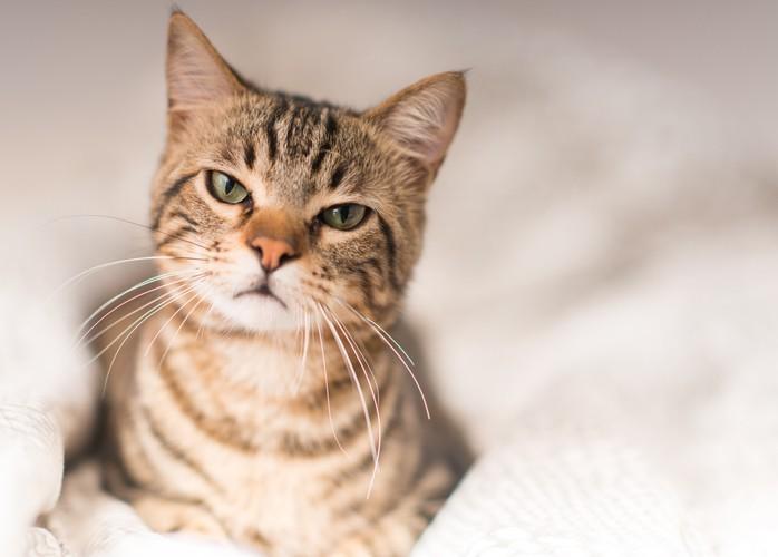 تكره العناق وتحب الافتراس.. إنها القطط!