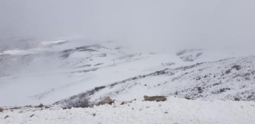 بالفيديو: الثلوج تتساقط على قمة جبل الشيخ