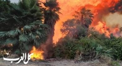طبريا: اندلاع حريق هائل بمنطقة أشجار