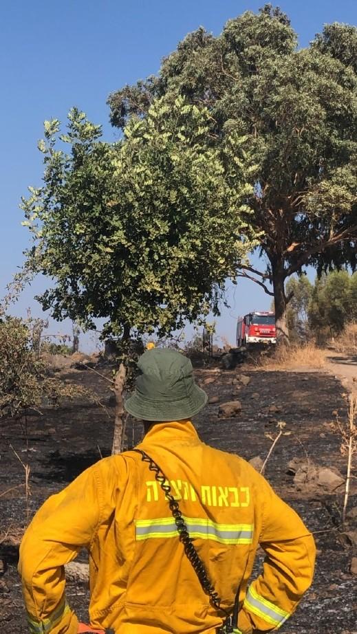 اندلاع حريق في غابة شفايتس بمنطقة طبريا