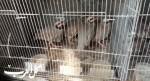مداهمة محلات لبيع الحيوانات المحمية في برطعة
