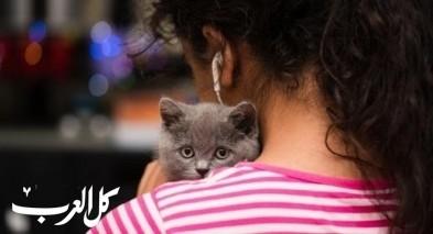 فتاة: احب القطط لكن أبي يرفضها