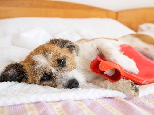 مرض غامض يؤدي بحياة الكلاب في النّرويج