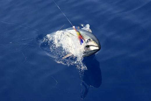 قصة سمكة نادرة قيمتها 3 ملايين دولار!