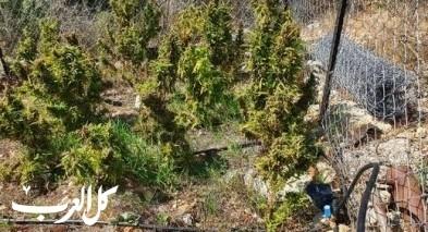 فسوطة:اعتقال مشتبه بعد ضبط أشتال المخدرات