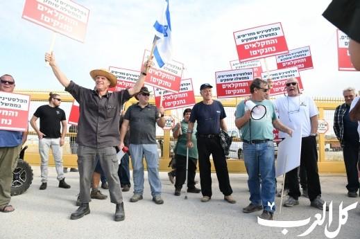 إسرائيليون يهربون العجول للأراضي الفلسطينية