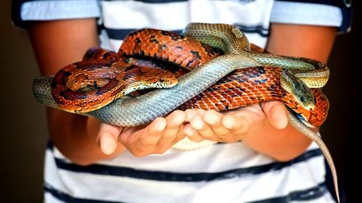 أمريكية تحدّت الطبيعة ونامت مع الثعابين!