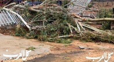 انهيار شجرة في جلجولية بسبب الرياح