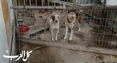الرينة: اعتقال شاب من الرينة لحبسه 14 كلبًا