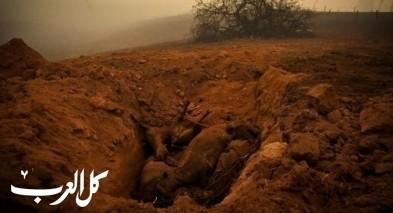 استراليا: 23 قتيلا ونفوق نصف مليار حيوان بحرائق