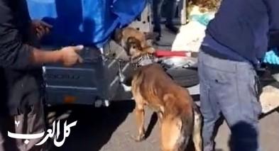 فيديو: اعتقال مشتبهين من يركا بالتّنكيل بكلاب