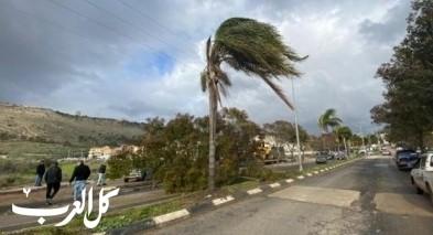 الرياح العاصفة تُسقط شجرة بمدخل اكسال
