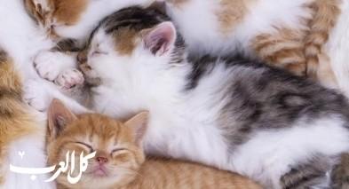 130 قطة عاشبت بمنزل سيدة.. قبل أن تقع المأساة