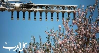 صور رائعة لبساتين اللوز في تل عراد