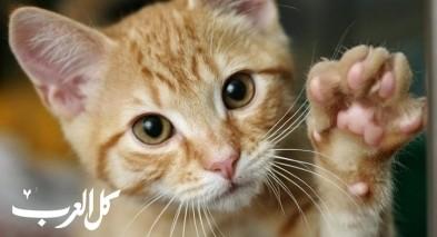 معلومات غريبة عن القطط.. تابعوا معنا!