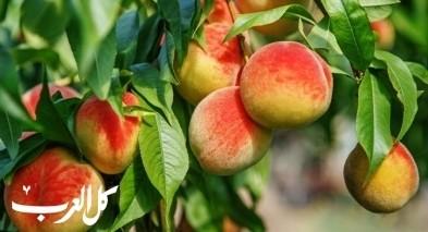 تعرّفوا على فوائد فاكهة الخوخ اللذيذة