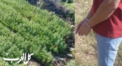 اعتقال مشتبه من يانوح - جث بزراعة الكنابس