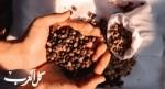 ما هي فوائد قشر القهوة الصحيّة؟