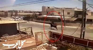 فيديو| رهط: حصان يصطدم بسيارة