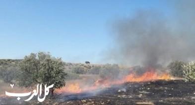 مستوطنون يضرمون النار في أشجار الزيتون قرب نابلس
