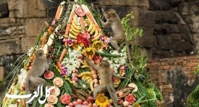 غرائب  مهرجان وليمة القرود في تايلاند