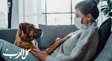 دراسة: الكلاب تكشف المصابين بكورونا