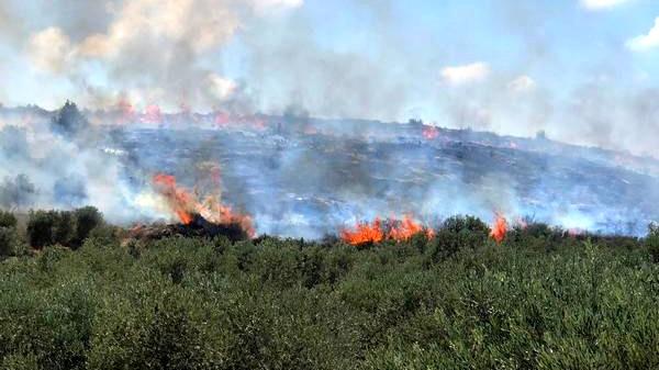 الجليل الغربي: النيران تأتي على نحو 1000 دونم