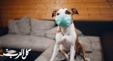 الأردن يعلن عن أول إصابة بالكورونا لـ كلب