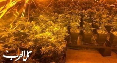 عكا| اعتقال مشتبهان بزراعة وانتاج المخدرات