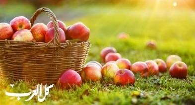 معلومات سريعة| تعرّفوا على فوائد التفاح