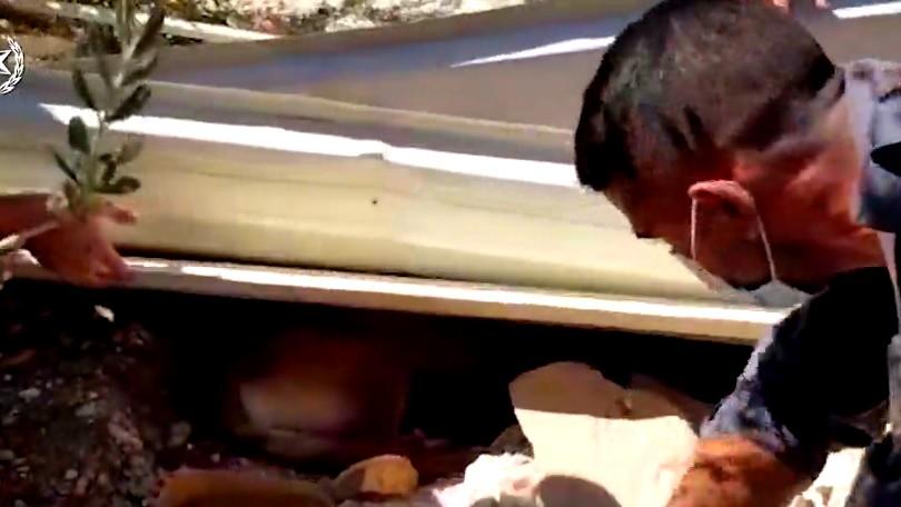 فيديو|تخليص كلبة وجرّائها الثلاثة في يركا