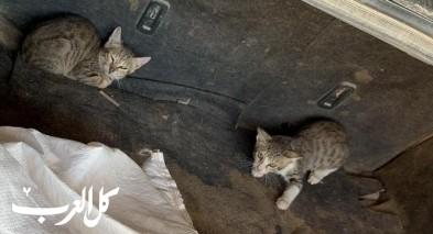 النقب: توقيف مشتبه بنقل قطط للخليل!